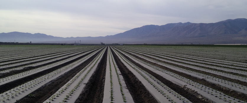 It takes less water today than ever to grow our food